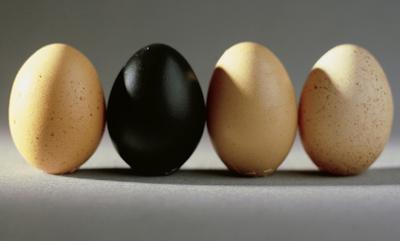 Яичный переполох